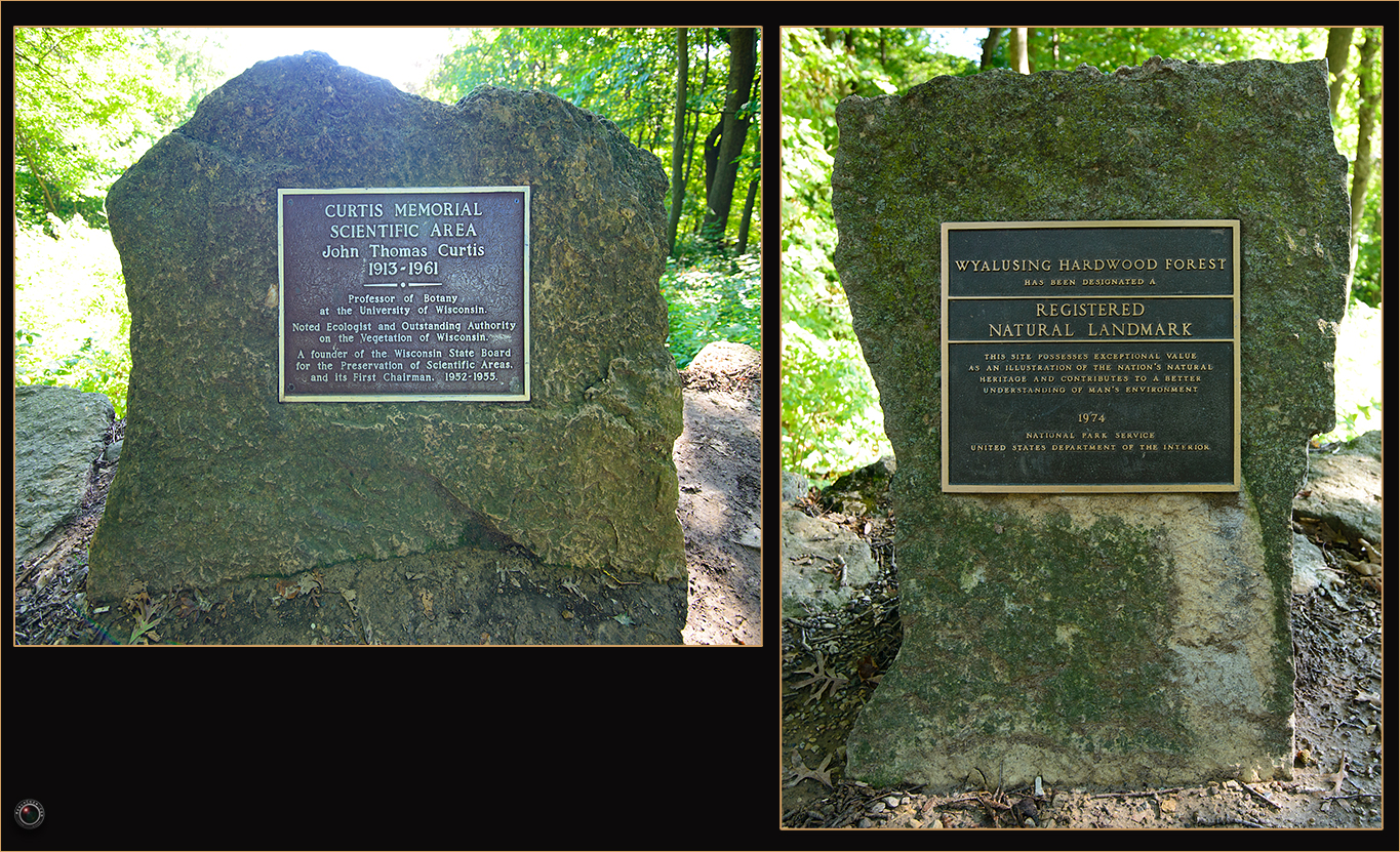 100 Wyalusing State Park John Thomas Curtis Memorial and Hardwood Forest Plaque