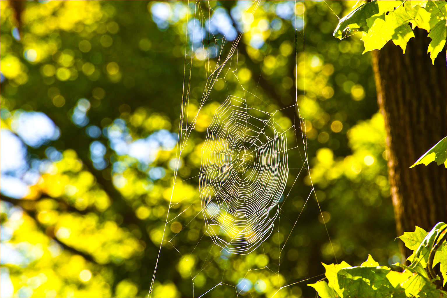 105 Wyalusing State Park Wisconsin Ridge Spider Web