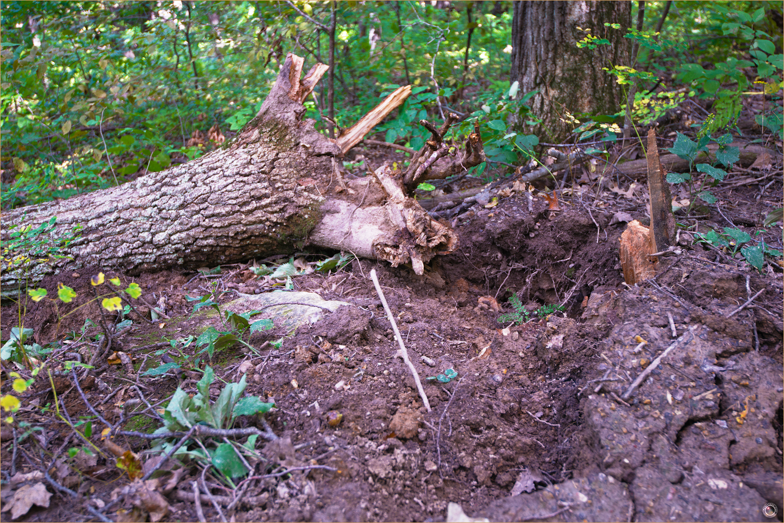 125 Wyalusing State Park Wisconsin Tree Decomposition