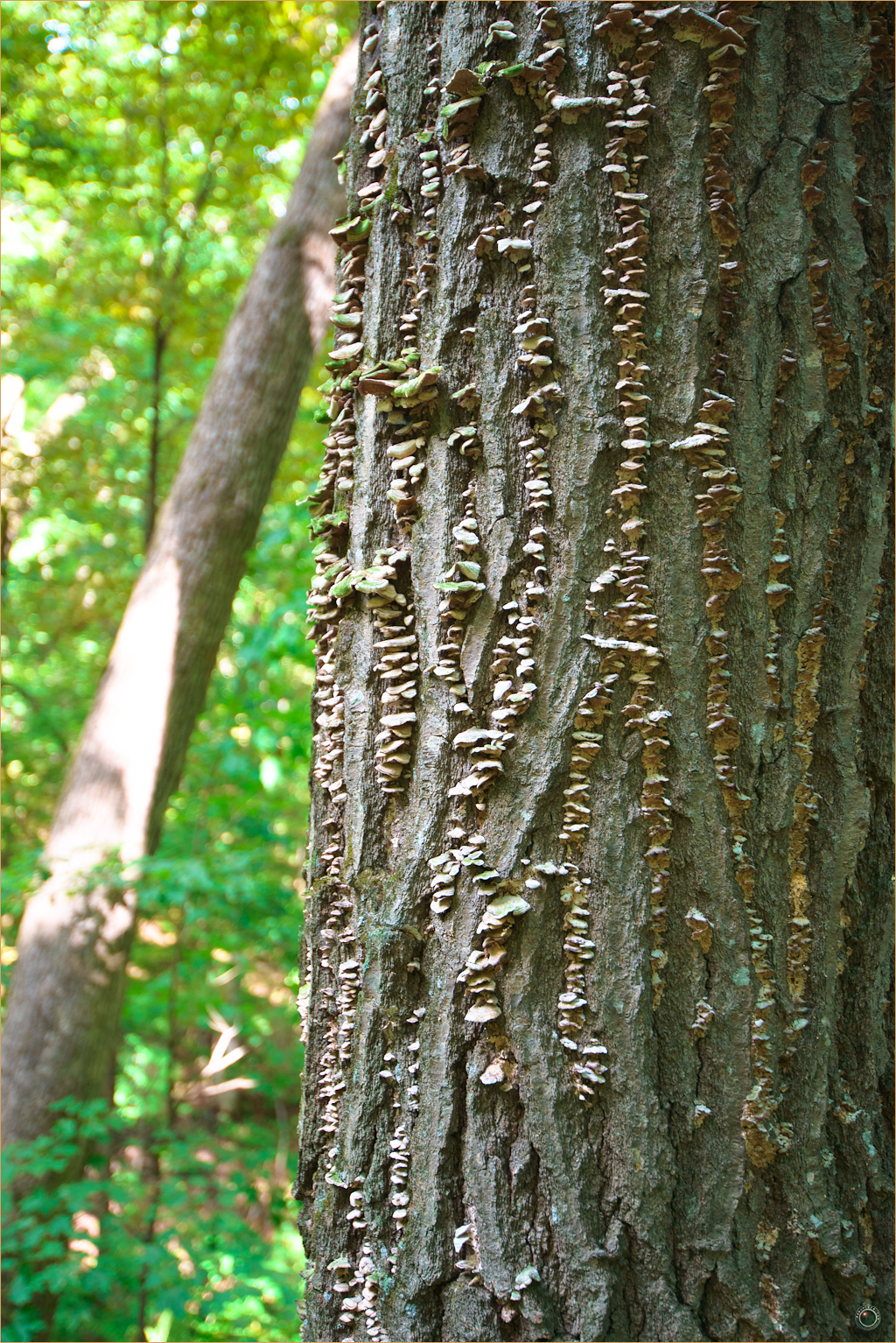 133 Wyalusing State Park Wisconsin Tree Bark