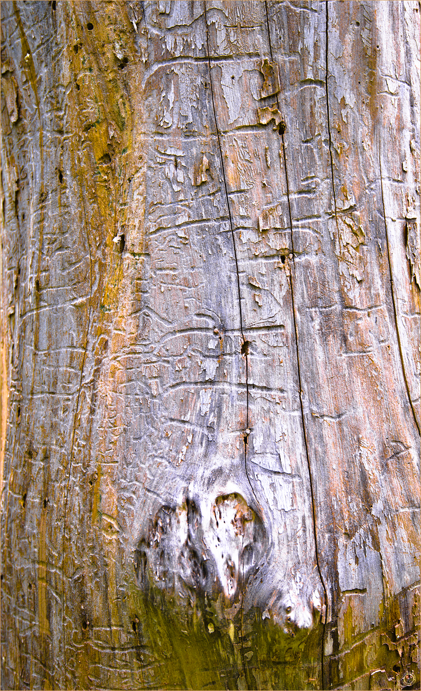 135 Wyalusing State Park Wisconsin Tree Bark