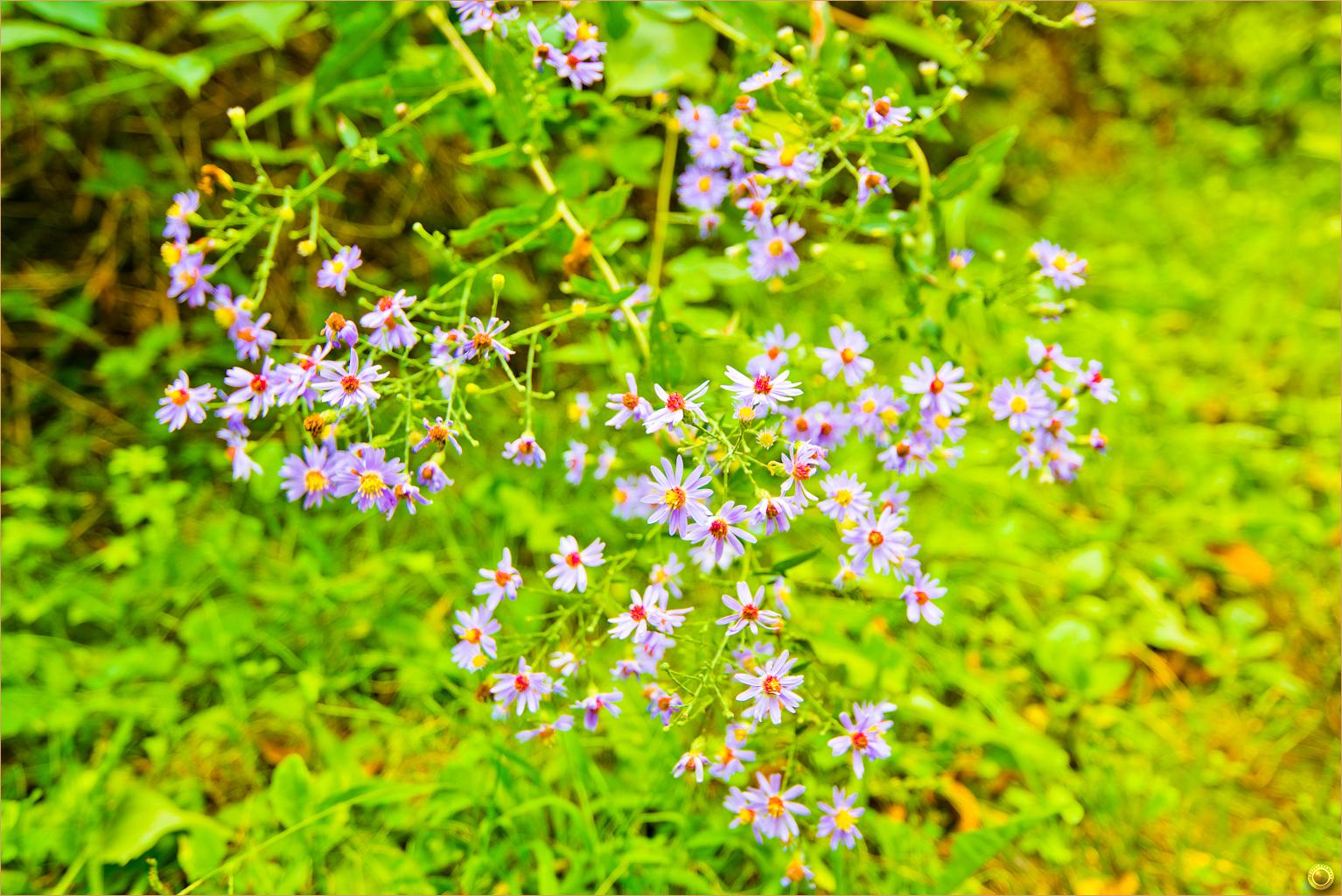 137 Wyalusing State Park Wisconsin Wild Flowers