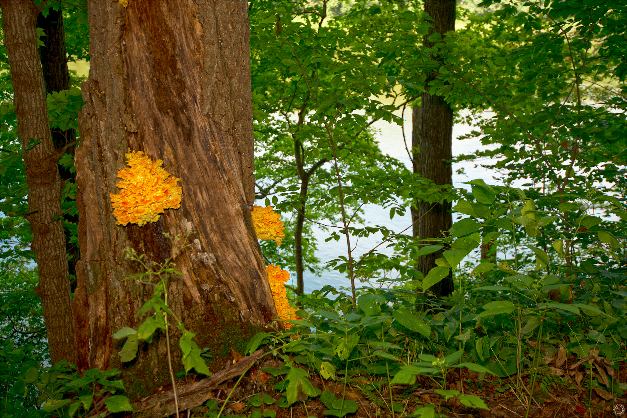 14 Wyalusing State Park Wisconsin Mushroom