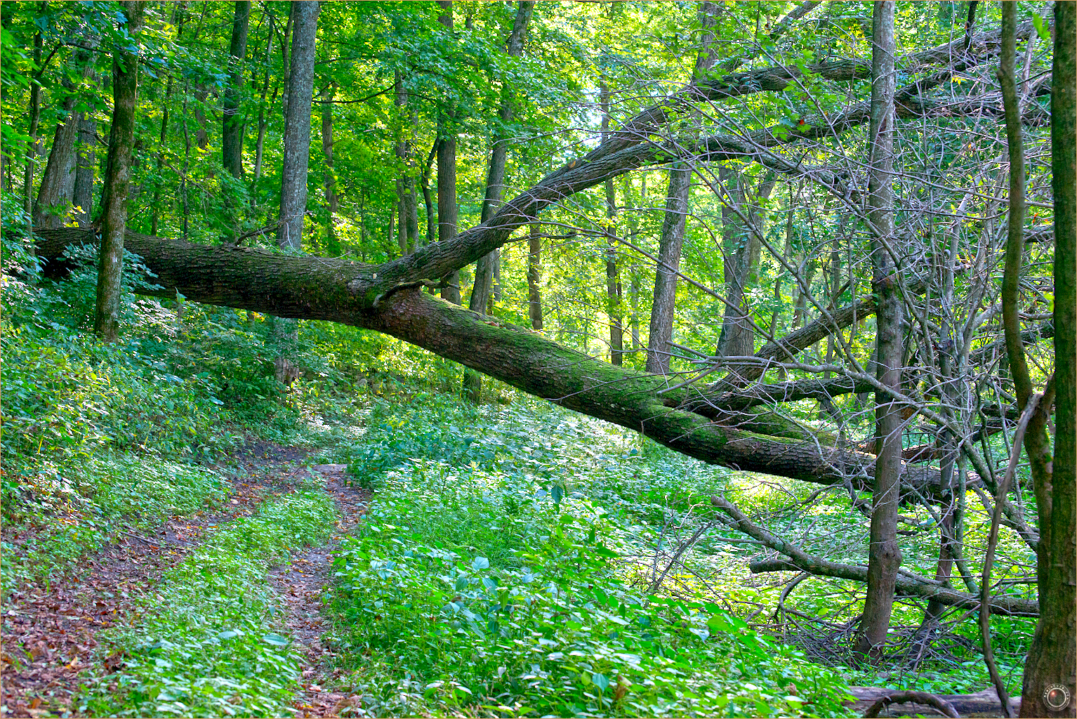 16 Wyalusing State Park Wisconsin Tree Fell DCS_8871 as Smart Object-2