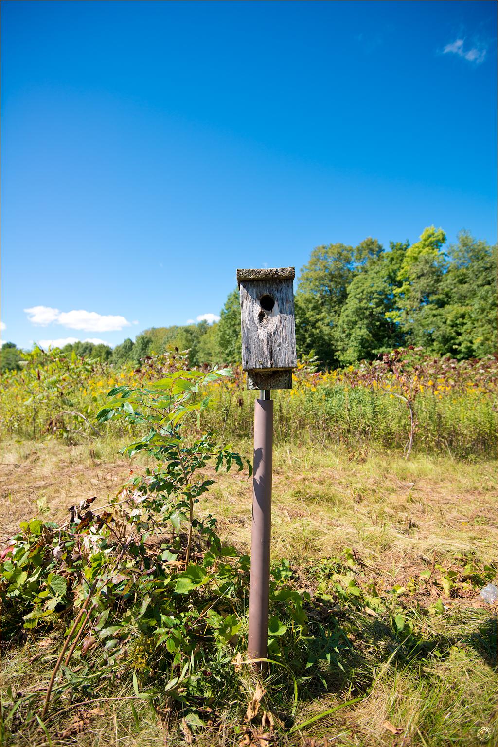 180 Wyalusing State Park Birdhouse