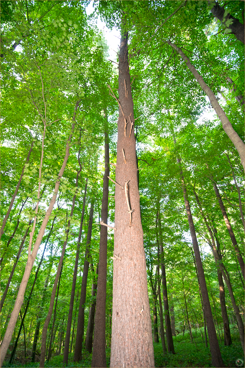 39 Wyalusing State Park Wisconsin Tree Regrowth