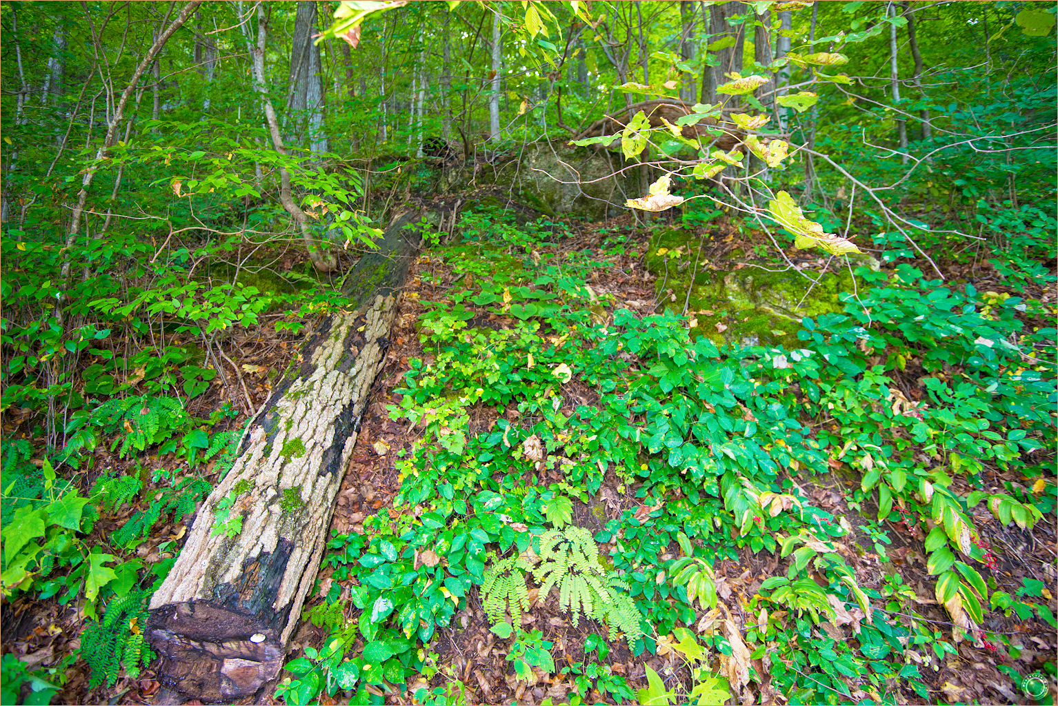 8 Wyalusing State Park Wisconsin Tree Fell