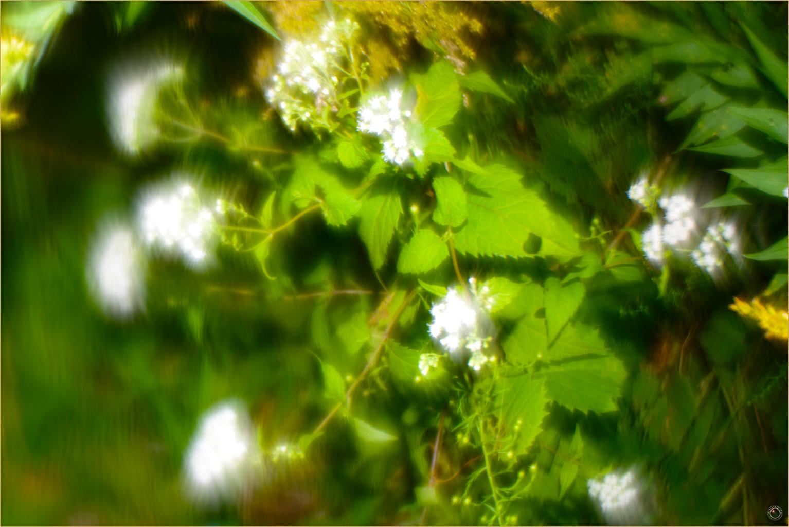 83 Wyalusing State Park Wild Flowers